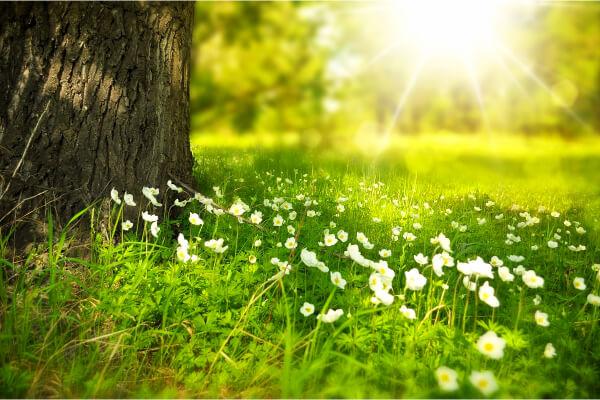 hierba y flores en un día caluroso de verano